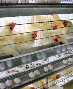 Jaulas para gallinas
