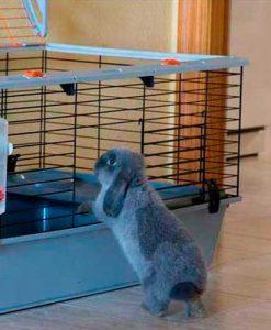 Jaulas para conejos enanos