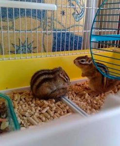 Jaulas para ardillas